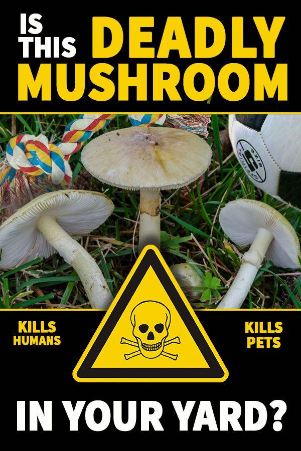 artificial rock mushrooms